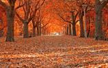 像樹一樣活著,走近你,能給綠色。活著是美麗風景,死了是棟樑