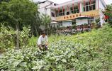 59歲農婦開農家樂,蔬菜自己種臘肉自己做,菜品不多客人卻喜歡