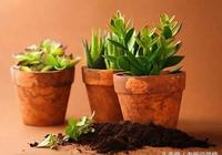 裝修完買來花卉植物移栽到家裡竟然養不活,原來是土的問題