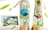 迷你生態觀賞魚缸,給你的家增添許多生機和觀賞景色