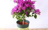 九月別再養綠蘿了!聰明女人都在養8種花卉,一頓飯錢讓家變花園