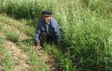80歲老人在城裡兒子家待了一天,就被送回農村,孫女主動提出照顧