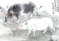 五行金豬、木豬、水豬、火豬、土豬運勢大全,你屬於哪個?