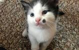 流浪貓一家被收養,只因一隻小貓非常引人注目,小貓:我有顆福痣