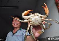 為什麼海邊的農民一旦捕捉到青蟹就說發財了發財了,青蟹到底多少錢一斤呢?