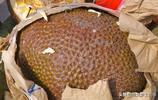 """農村集上賣一種""""稀罕果"""",深褐色大如西瓜,表面帶刺,你吃過嗎"""