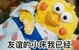 無水印鸚鵡表情包合集 友誼的小床我已經鋪好了~