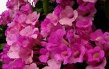 這些花不僅特別,還很漂亮,來認識一下