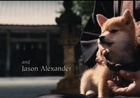 《忠犬八公的故事》希望所有的狗狗都能幸福