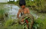 實拍:小男孩為了生計,在水田裡徒手抓3.4米大蟒蛇,看著好心塞