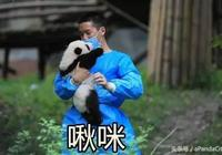 新的熊貓表情包在這裡 拿走不謝