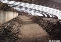 農村都有哪些養殖騙局?有什麼好的建議不讓農民上當?