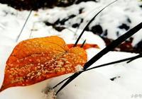 默默的堆積心雪的委屈