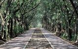 """廣州旅遊景點攻略,""""大夫山森林公園""""合適親子游"""