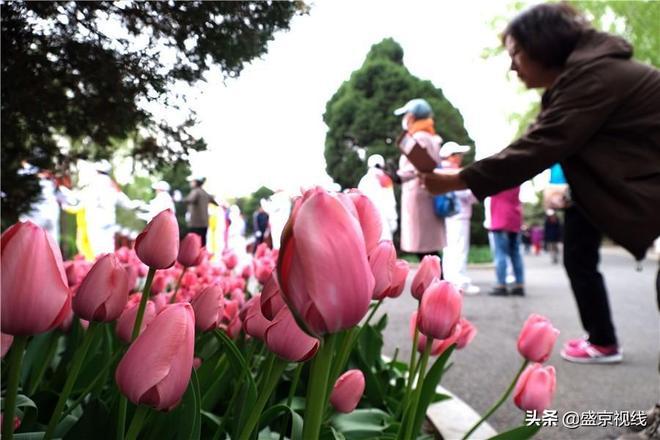 瀋陽北陵公園五月花朝節開幕吸引眾多遊客賞花聞香