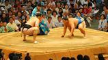 實拍日本境內的中國相撲人,不斷的努力只為胖上加胖