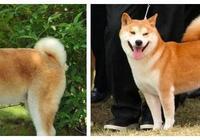 狗狗長大前vs長大後