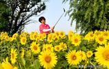 河南夏邑:葵花綻放引遊人