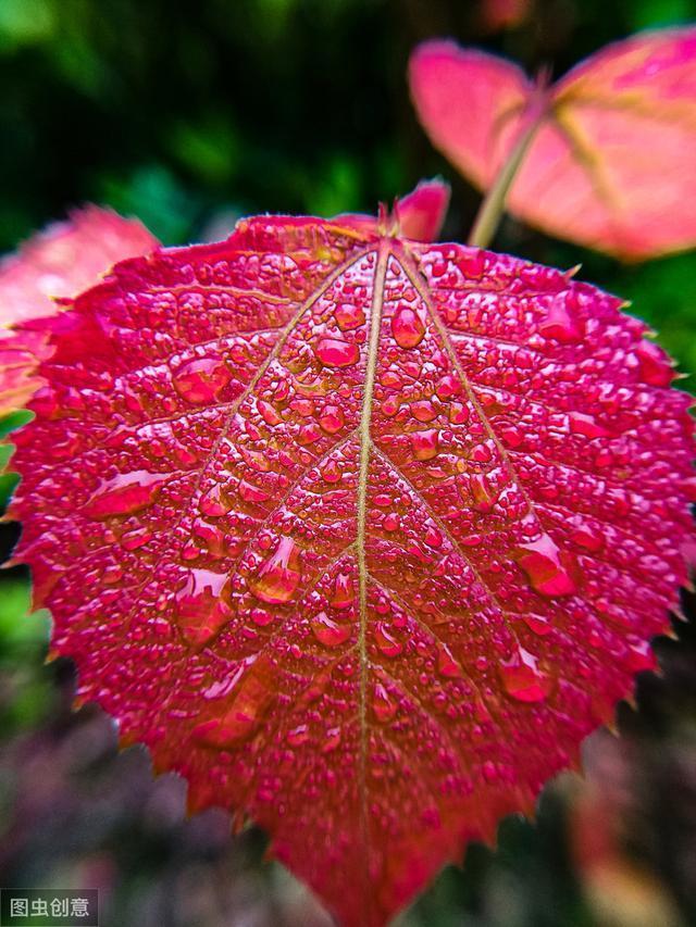 """100句古詩詞中描寫""""雨""""的名句集錦,不可錯過的唯美意境"""