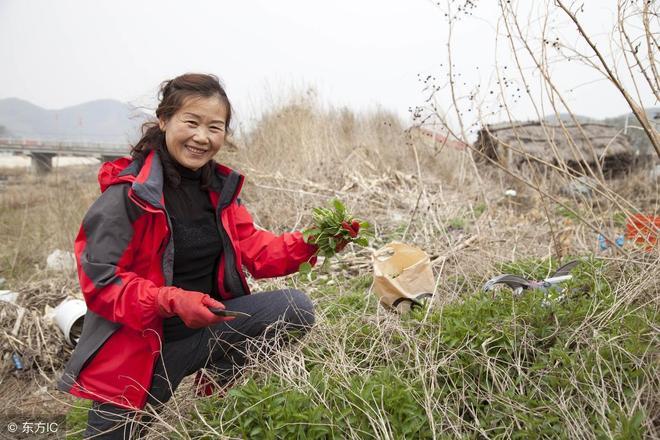 隨處可見的身影,挖野菜成了一種樂趣,春天不去挖都感覺缺點啥