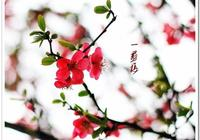 南宋蔣捷《一剪梅》的末尾八個字,寫盡了流年之愁、悽美冷豔