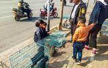 實拍安徽蕭縣狗市,流浪狗、流浪貓僅10元一隻,看看有你喜歡的嗎