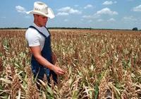 美國高粱船返航,大豆庫存創2900萬噸新高後,美國農民更大損失出現