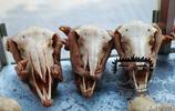 30元一斤的五香羊頭肉,半個羊頭就能切一大包,下酒啃肉吃美得很