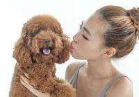 泰迪犬會有這5種性格,第3種很暖心,你家是哪種?