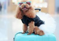 想帶狗狗坐飛機看世界卻不知怎麼做,鏟屎官看這一篇就夠了!