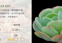 碧桃——多肉植物