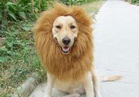 狗狗有這些態度,這證明它不把你當回事,家裡它最大!
