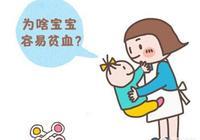八月齡寶寶每天喝稀粥,出現貧血,寶寶飲食應該如何安排?