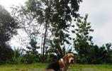動物圖集:田野小獵犬