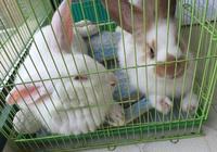 兔子圈:不知道自黑的兔子不是老司機