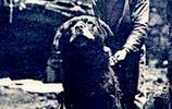 珍貴西藏老照片:帶你看看百年前的西藏是什麼樣子,圖三藏獒凶猛
