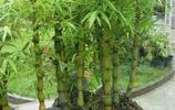 家中擺放這幾種植物,風來葉飛羨煞旁人