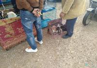 狗市:商販出售土貓,男子看中後60元一隻全部收購!