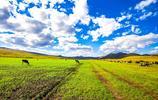 呼倫貝爾旅行的日子,空氣清鮮,天空蔚藍,總想高歌一曲