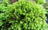 苔蘚可以吃 從吃苔蘚獲救漁民迷失大海吃苔蘚活56天來了解苔蘚