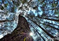 植物逆光攝影技巧大全,光斑光暈和星芒,輪廓光剪影和透亮