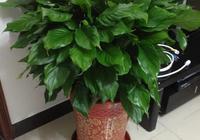 這6種綠植能招財進寶,客廳一定要放一盆,包你悶聲發大財!
