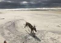 狗狗患上分離焦慮,沒人在家就自殘,主人一招解決的狗狗焦慮問題