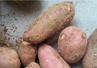 愛吃紅薯的一定要收藏,教你6種美味又簡單的做法,好吃極了
