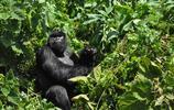 盧旺達 '千山之國' 不只有千山
