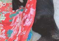 轉發:小奶狗含淚守候媽媽屍體,用自己的身子幫媽媽取暖!