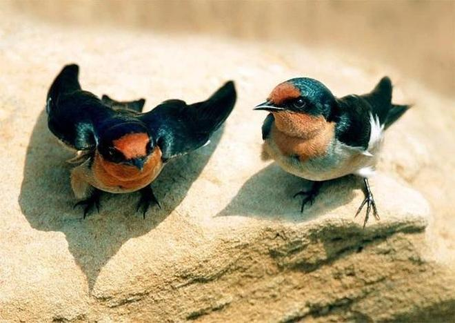 這些珍奇的鳥兒,你只要認識三種,叫得上名字,算你牛!