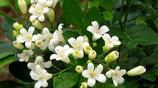 如果你家有陽臺,家裡一定要放下面這8款盆栽,家裡滿屋飄香