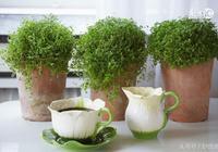 你家盆栽長得慢?你家花卉不生長?快來試試這個方法吧!