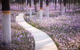 玉淵潭植物園人山人海?這裡美不勝收、環境清幽,離你家還不遠